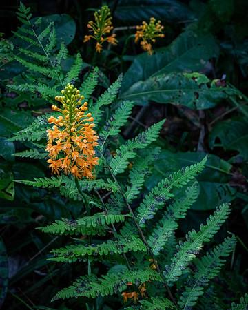 Watson Rare Native Plant Preserve