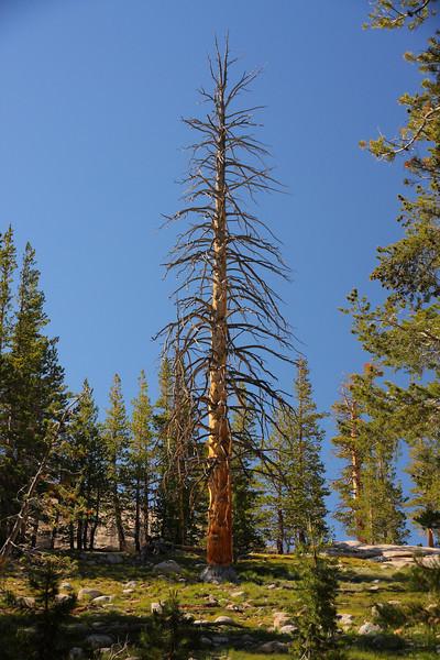 Yosemite 67.JPG