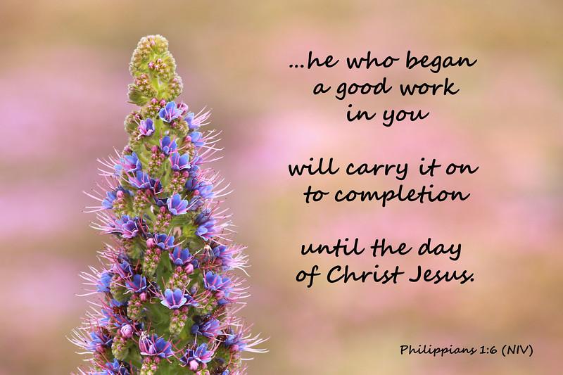 50_Philippians1-6_KH_2014-7-2.jpg