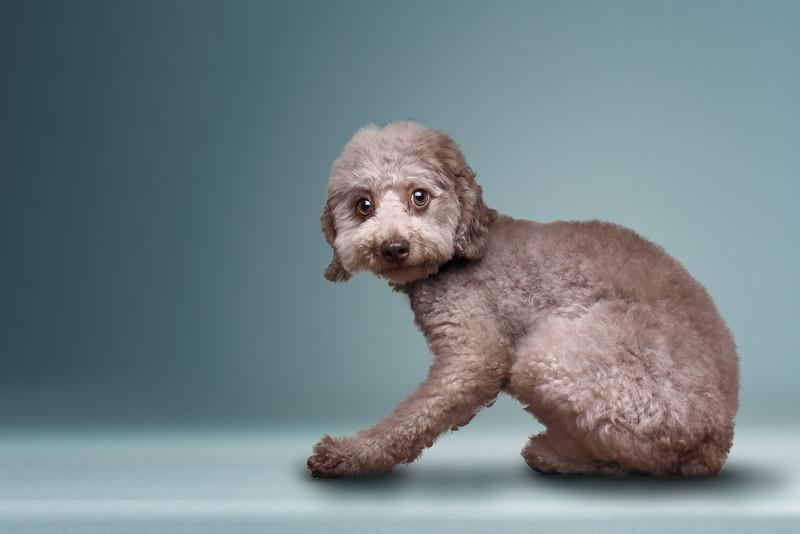 Gordon-dog-6.jpg