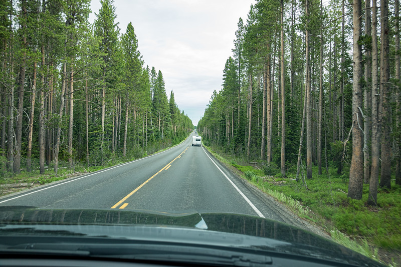 Jul 27 Driving toward West Thumb Geyser Basin; road is lined with lodgepole pine trees
