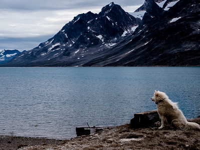 Nanuk - our dog escort (in lieu of the polar bear we never saw but had to stand guard for)