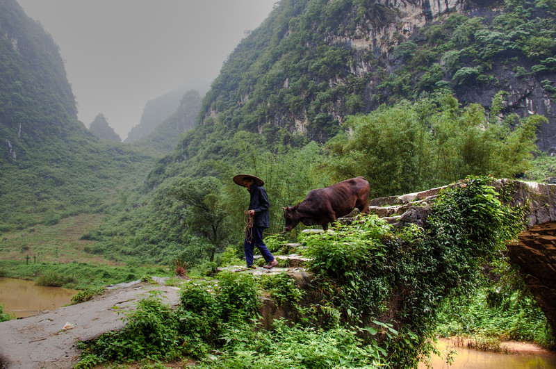 2012 china fisherman & old man w- cow-12.jpg