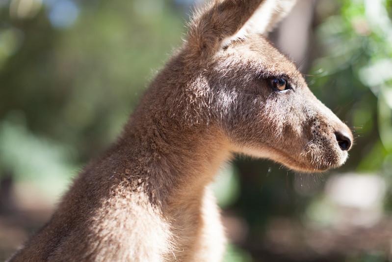 Tasmania_2015_291.jpg
