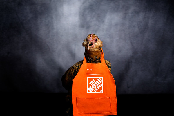 Home Depot Chickens