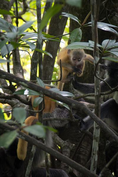 Borneo-2014-167.jpg