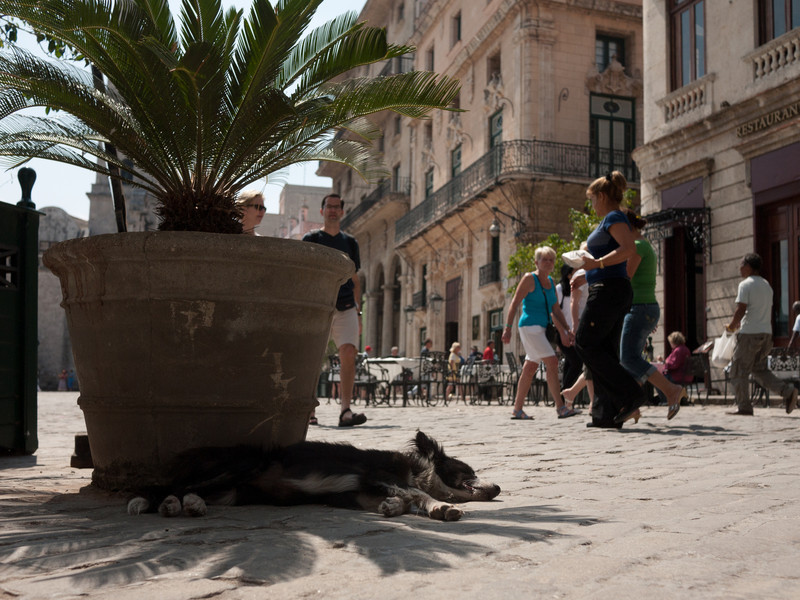 This dog in Plaza San Francisco had a bad leg. At the same time the dog was trying to keep out of the sun, so were we - the sun moved so the shade we were sitting in originally had disappeared.
