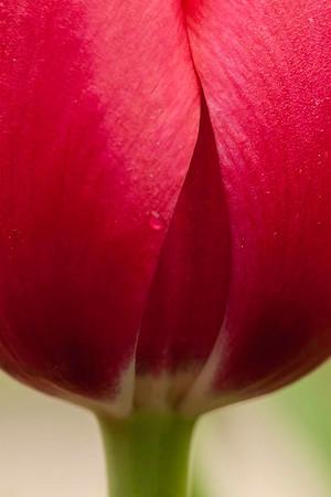Richmond - Lewis Ginter Botanical Gardens