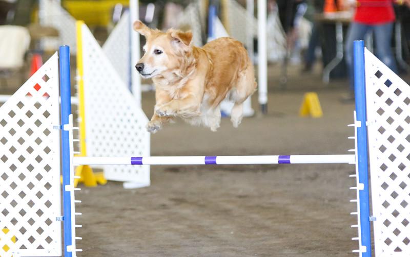 3-15-2015 Bloodhound-1544.jpg