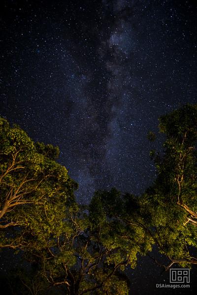 Night sky at Wildman Wilderness Lodge