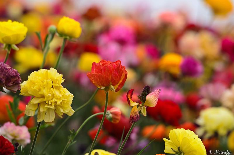 130428_119_FlowerField.jpg