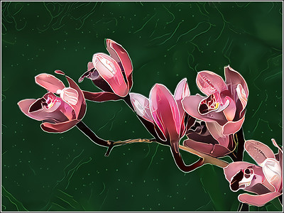Orchids Pink Fantasy