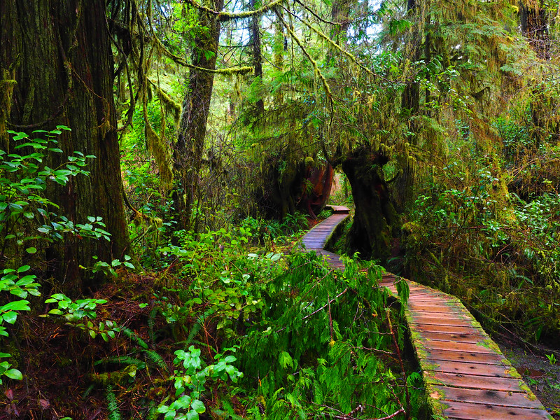 Rainforest Trail Best 2-3.jpg
