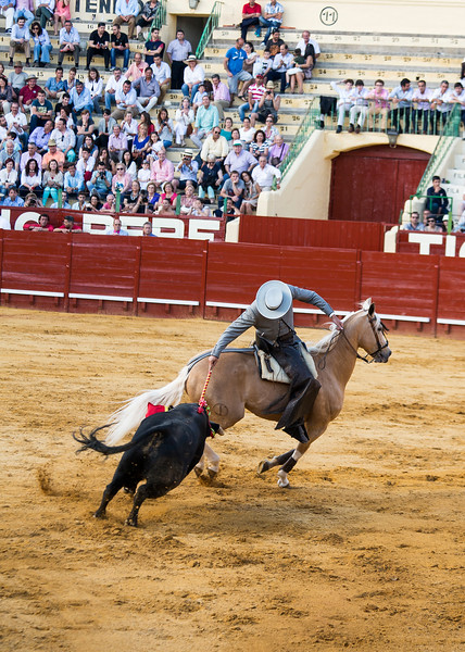 Bullfighting H39.jpg