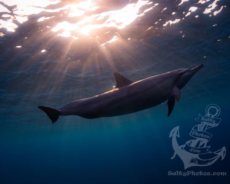 dolphinrays.jpg