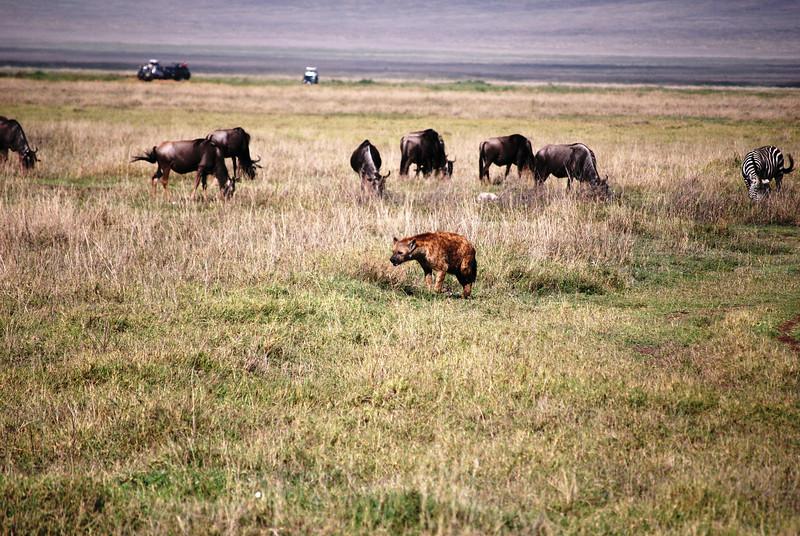 Ngorongoro (36).JPG