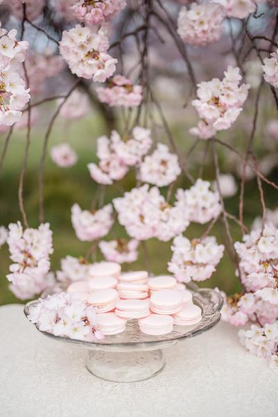 Cherry Blossoms (82 of 182).jpg