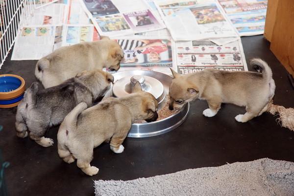 Pups 6,5 week - 24 oktober 2010