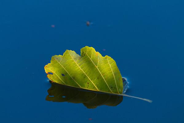 Autumn Macro