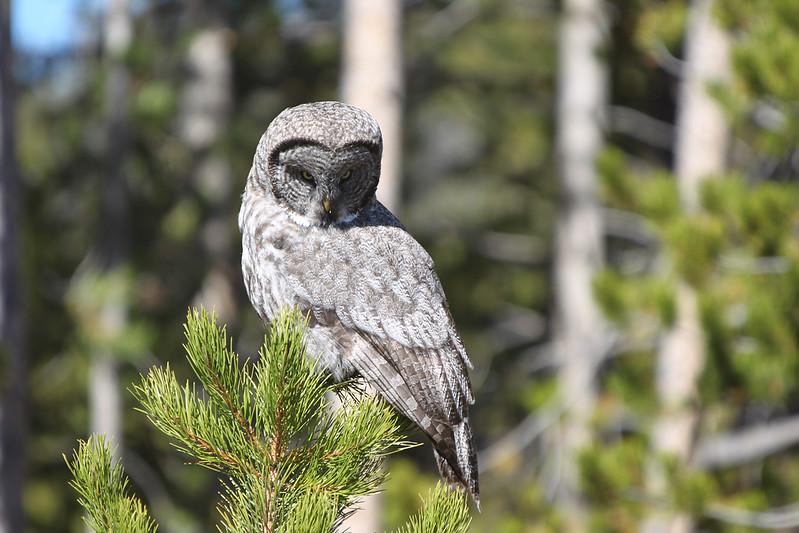 Fall Trip Wyoming & Montana 2016 (91 of 193).jpg