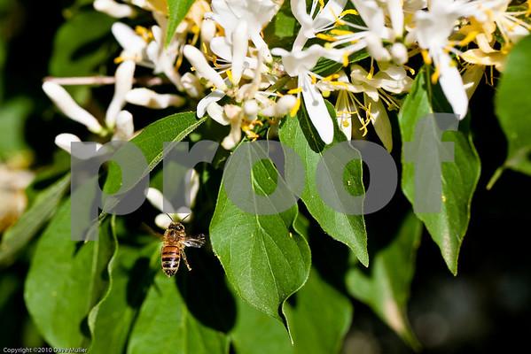 Woodward Park Bees
