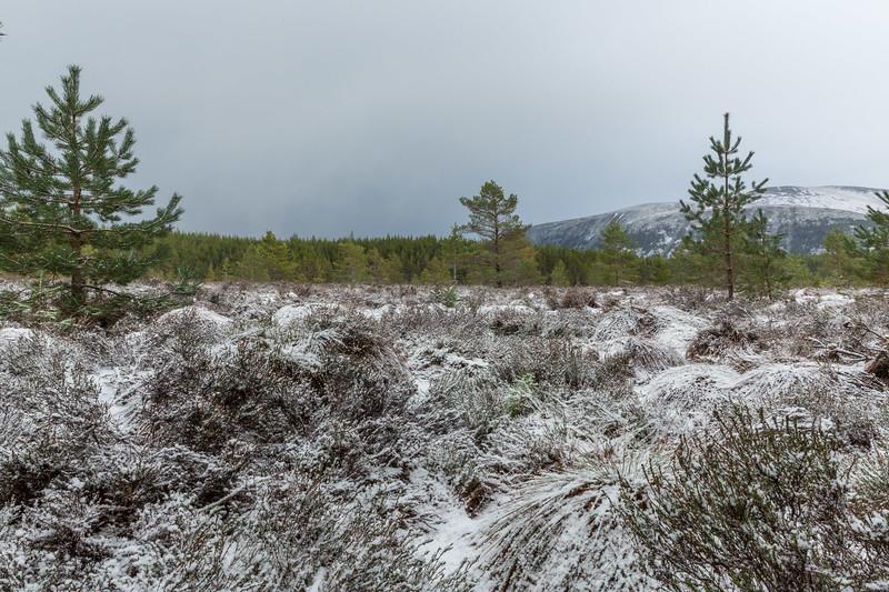 Inshriach Forest - Cairngorms