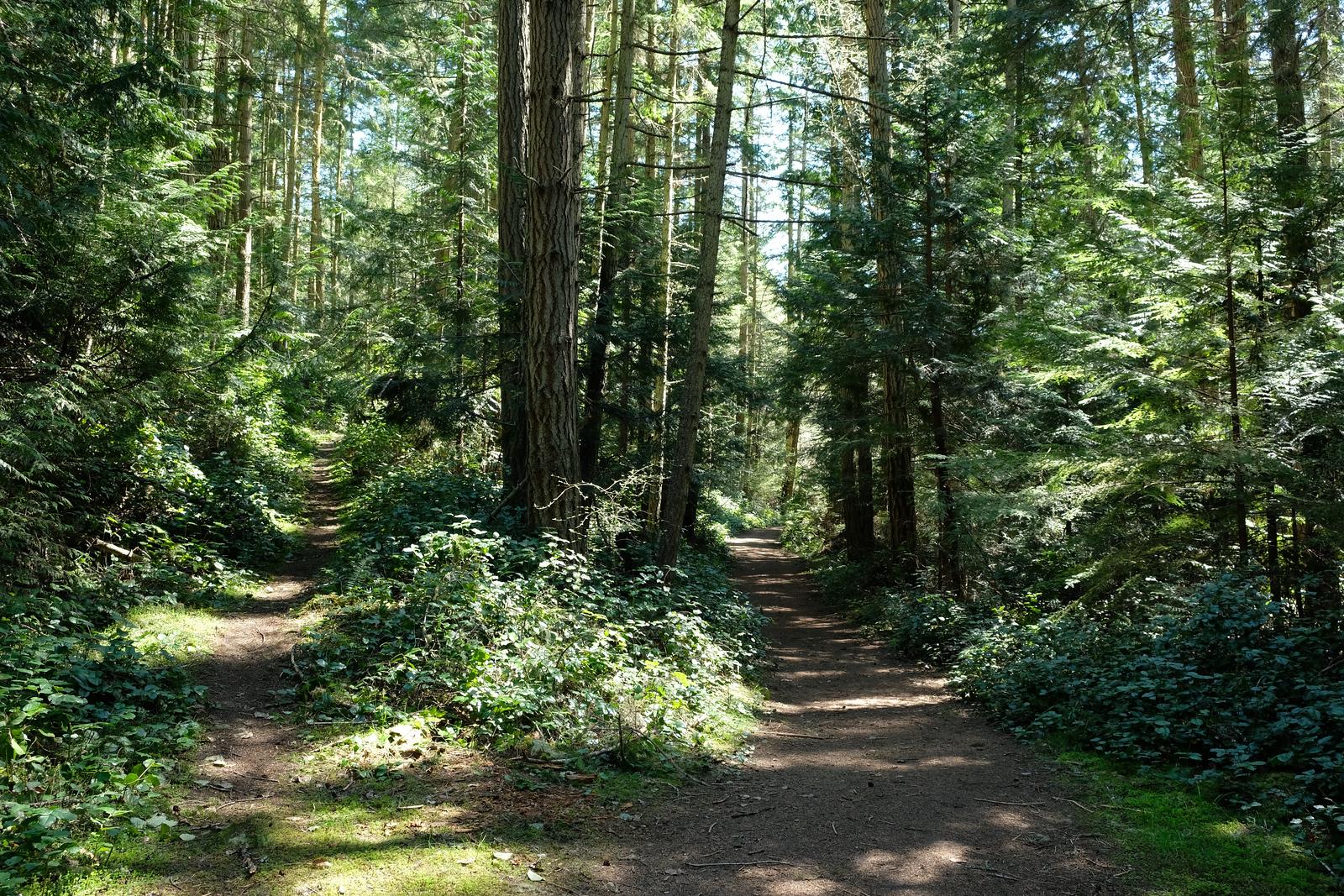 Single-track in Miller Peninsula State Park