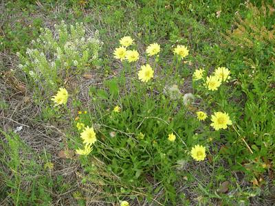 Texas Wildflowers - Spring 2010