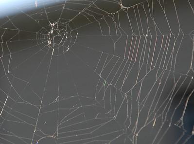 2012 07 12: Web Pics, Home