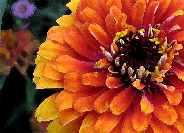 sundayflora0827wc.jpg