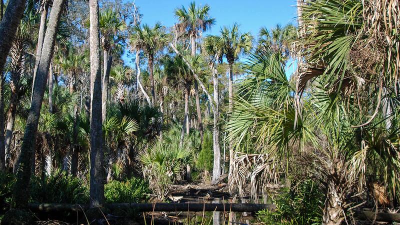 Palms in a jungle-like setting