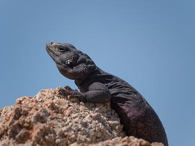 Land Reptiles