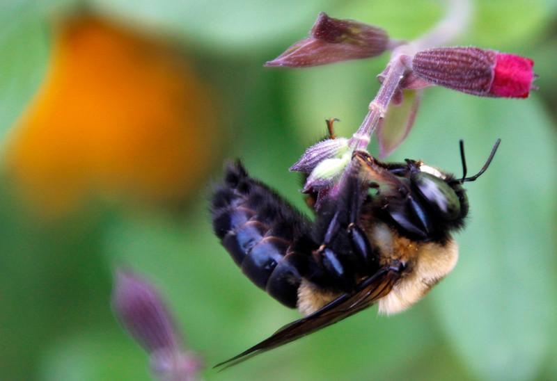 Bumble bee 7