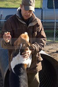 Loudoun Fairfax Hound Puppies for Andy Bozden
