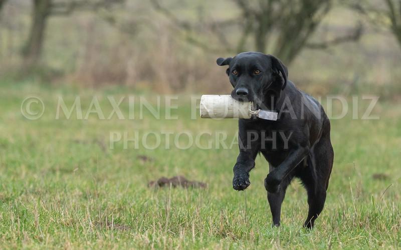 Dogs Jan 2019-4810.jpg