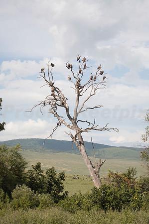 Seregeti National Park