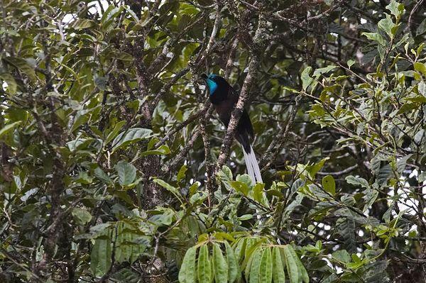 PNG Land, Photos w/o Tourists
