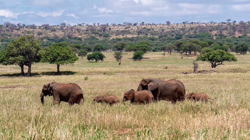 Tanzania-Tarangire-National-Park-Safari-Elephant-21.jpg
