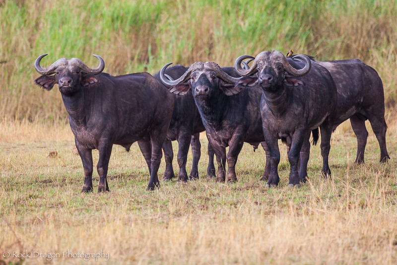 North_Serengeti-81.jpg