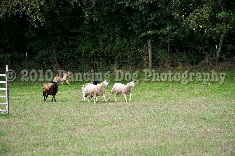 PacNW_HT_Sun_Sheep-6565