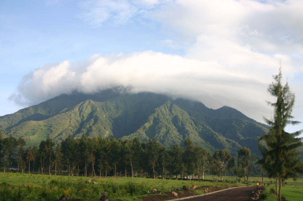 Volcanoes National Park in Rwanda: Best place to see mountain gorillas
