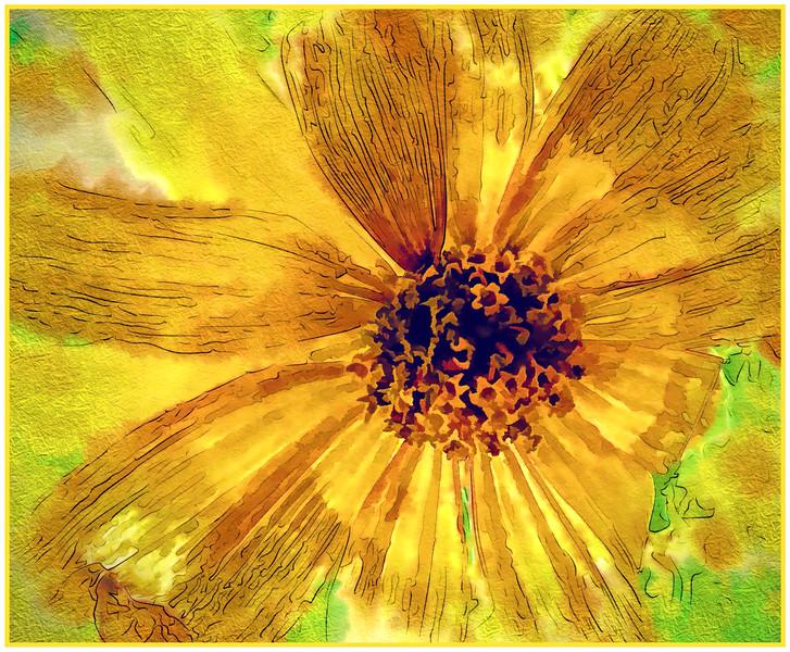 C-1-Daisy in Watercolour-Bob Walling-M-Y.jpg