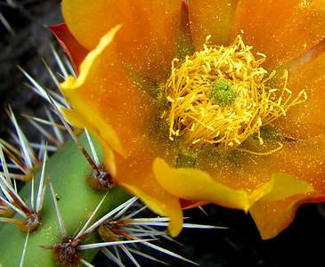 Plantlife/flowers/landscape