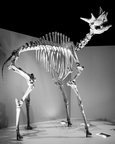 Some sort of prehistoric ungulate.  ??