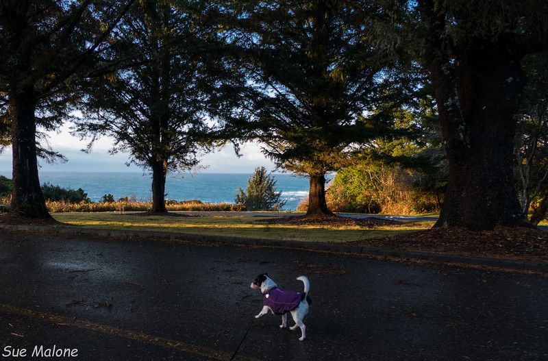 Morning walk at Harris Beach SP-12.jpg