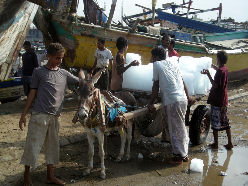 ice for the fishing boats in Hodeidah