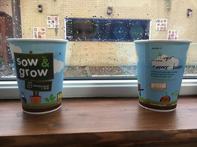 Sow & Grow 2017