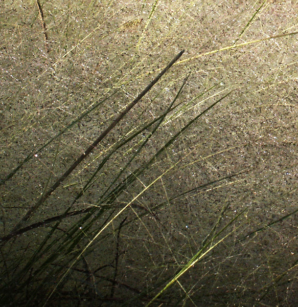 05-Dew in the grass copy.jpg