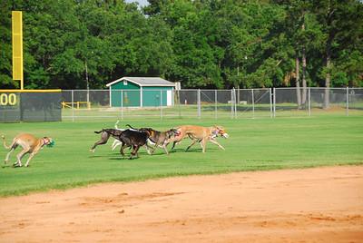 Greyhound Playdate, 16 JUN 08