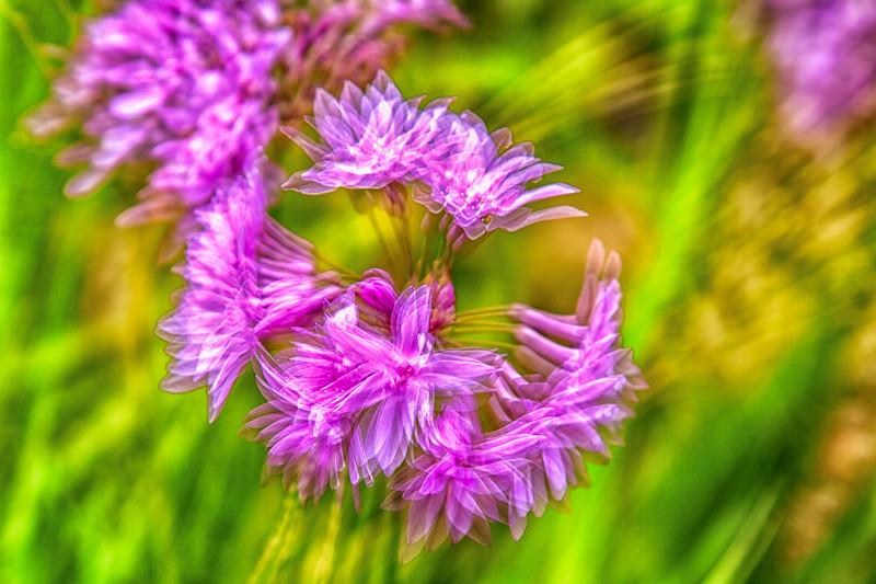 may 13 - flower.jpg